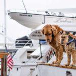 Viaggiare con un cane: cosa bisogna sapere