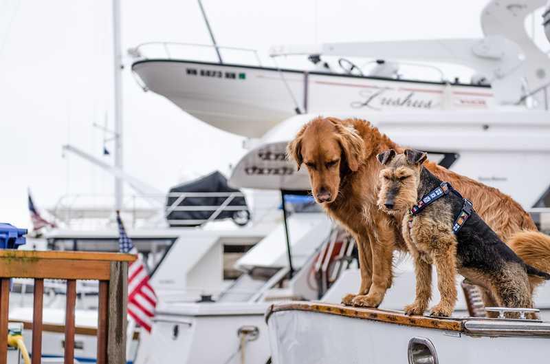 Viaggiare con un cane